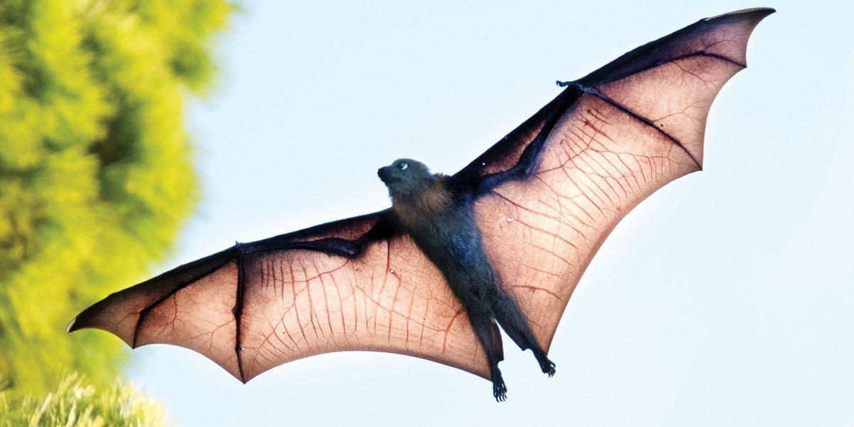 Bat trail eventbrite header