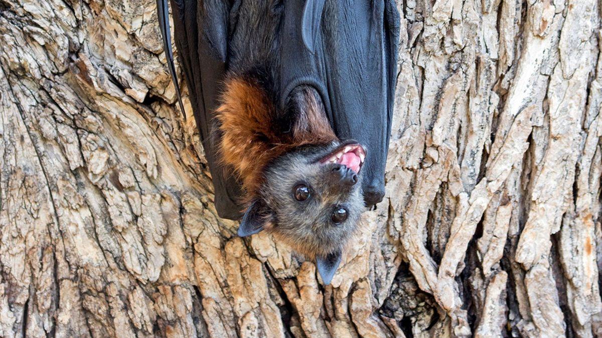 Bat camp event